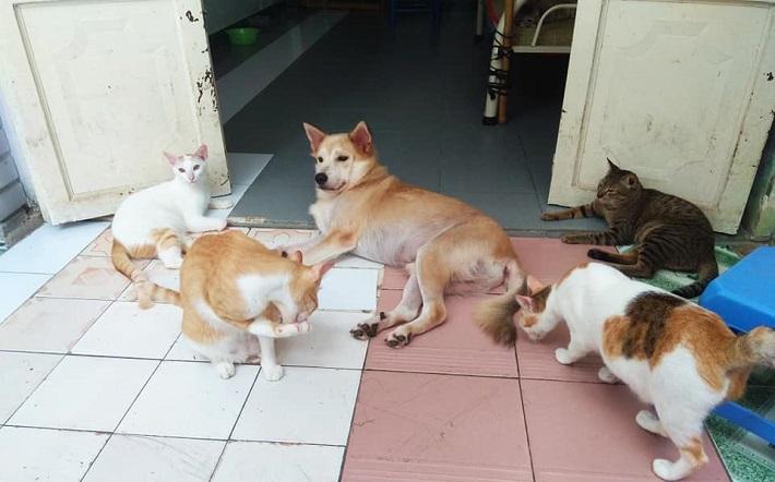 Shop thú cưng Thủ Đức - Rainy Cat