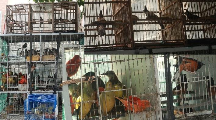 Top 5 cửa hàng bán chim cảnh đẹp và rẻ nhất TPHCM - Chim cảnh A Bờm
