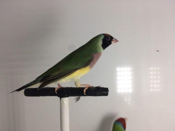 Top 5 cửa hàng bán chim cảnh đẹp và rẻ nhất TPHCM