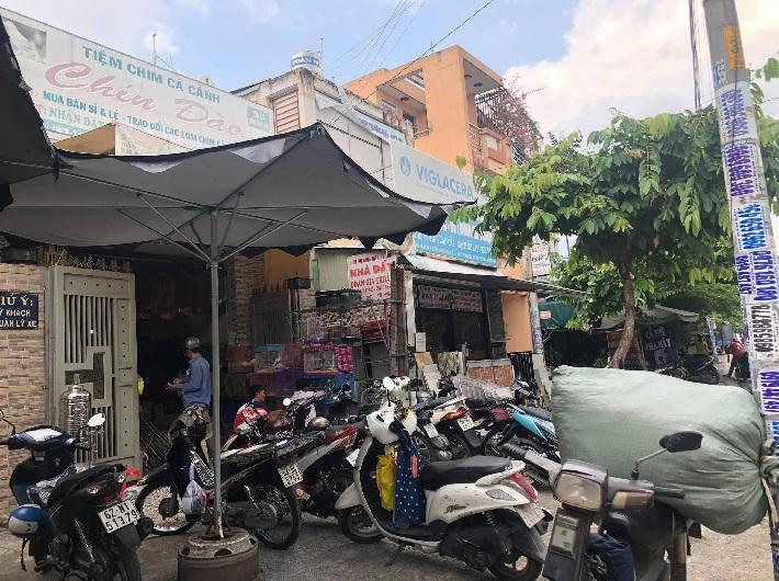 Top 5 cửa hàng bán chim cảnh đẹp và rẻ nhất TPHCM - Chim cảnh Chín Đào