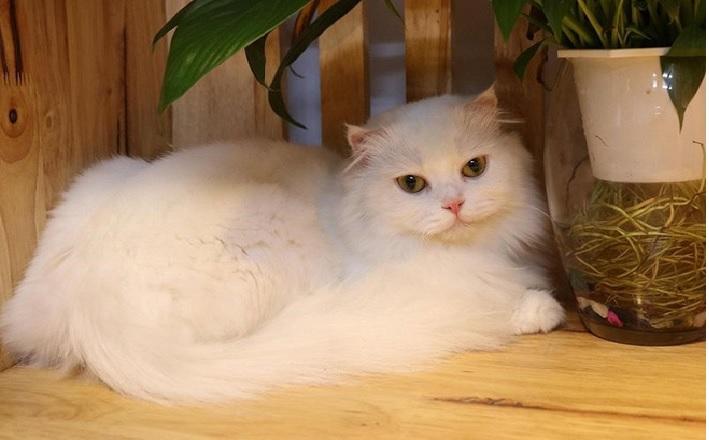 Shop bán mèo cảnh TPHCM - Dogily Petshop | Nguồn từ trang web dogily.vn