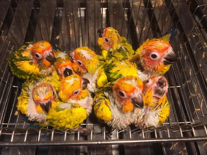 Top 5 cửa hàng bán chim cảnh đẹp và rẻ nhất TPHCM - Chim cảnh Hồng Nhung