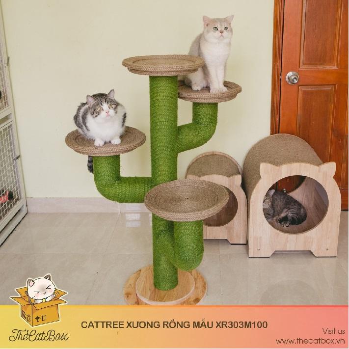 Shop bán mèo cảnh TPHCM - The Cat Box