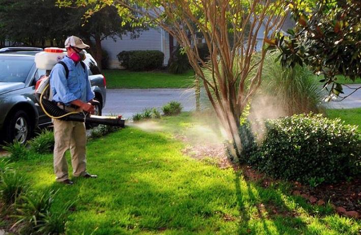 Công ty diệt côn trùng - Công ty Safe Solution