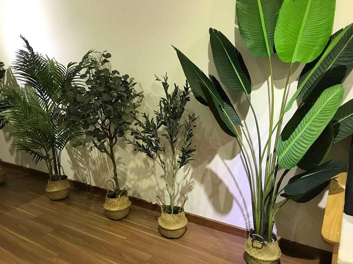 Địa chỉ bán bonsai TPHCM - Tiny Garden