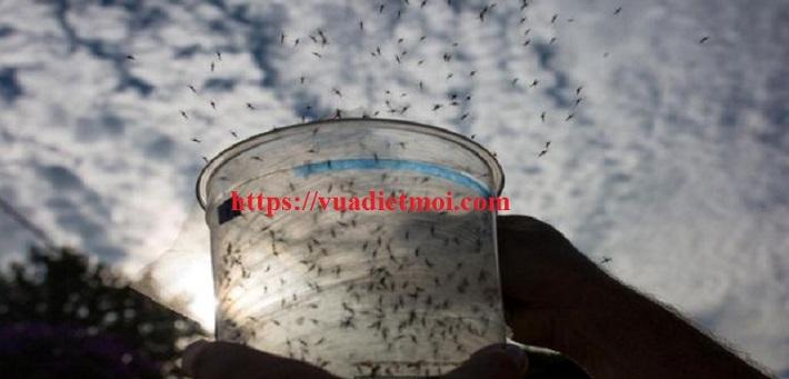 Công Ty diệt muỗi - Công Ty TNHH Đại Việt | Nguồn từ trang vuadietmoi.com