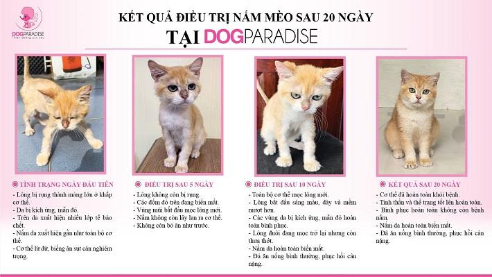 Dog Paradise | Nguồn từ trang dogparadise.vn