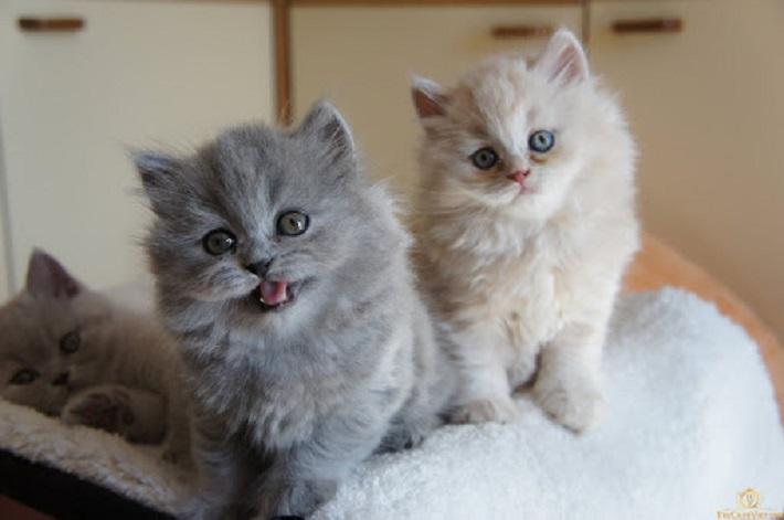 Pet House | Nguồn từ trang thucanhviet.com